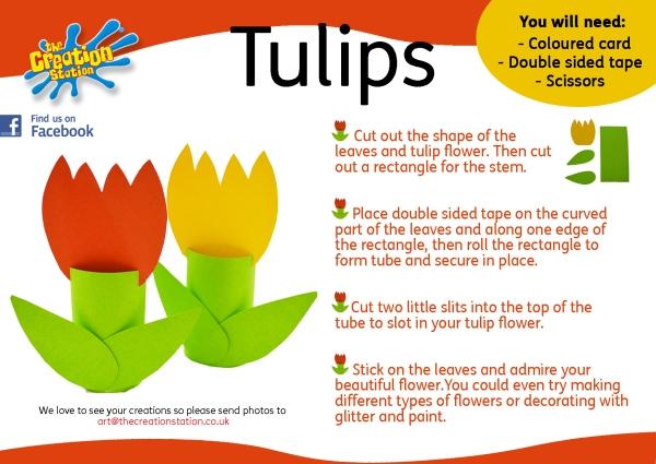 tulip how to